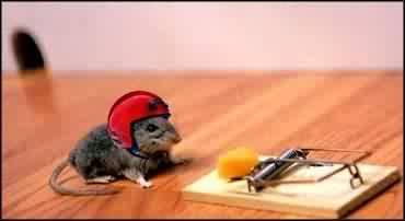Мышонок в каске около мышеловки с сыром