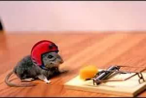 Мышь в шлеме около капкана с сыром